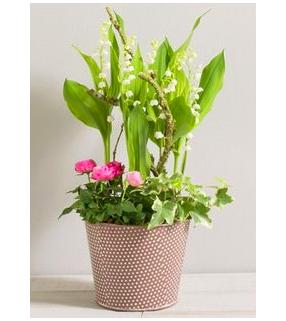 Composition plante et muguet
