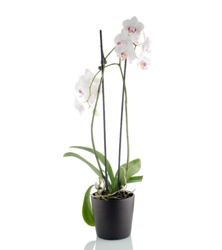 Orchidée Blanche 2 branches